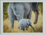 Africa Collection-1