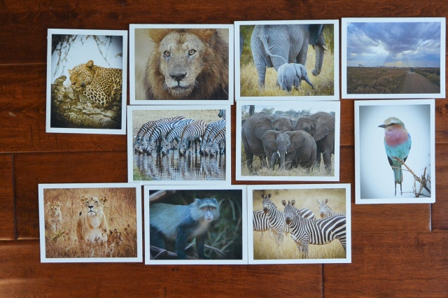 Africa Collection-3